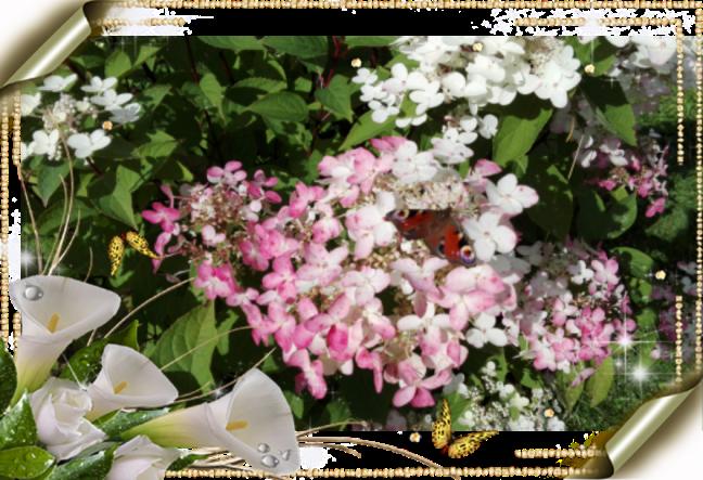 photoart_08_27_2016_08_39_23.png